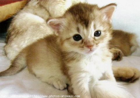 un petit chaton trop mimi